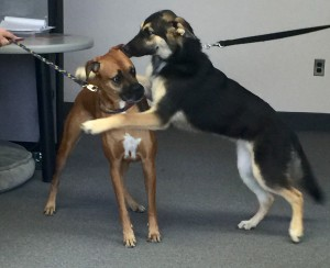 Dexter and Cali love being at the office.